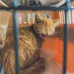 雪の中から猫を救出!救出時間なんと3時間・優しい方に出会い幸運