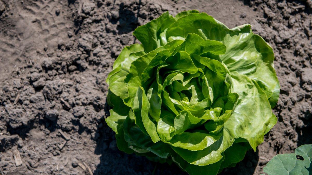Solidarische Landwirtschaft Düsseldorf baut bald auch #Gemüse im #Stadtgebiet an: Jeweils eine Fläche im Südpark und in Hamm sollen in der neuen #Erntesaison zur Verfügung stehen. Gemüsefreunde können noch Ernteanteile zeichnen. https://t.co/yHiw1365zh https://t.co/PvQtrAQXbR