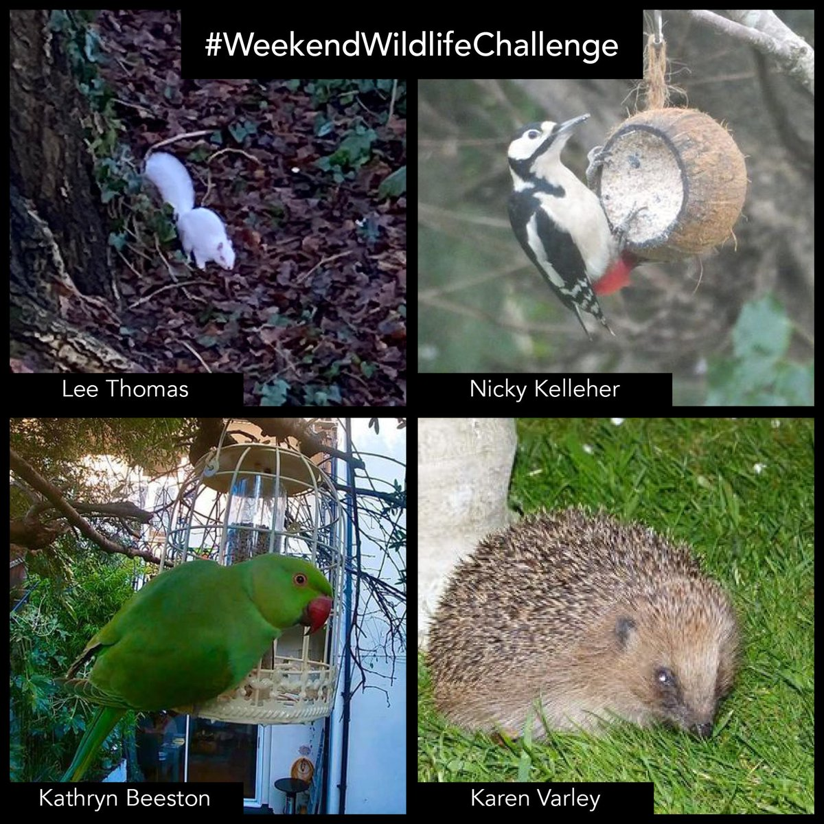 We had so many fantastic photographs posted for this weeks #weekendwildlifechallenge - well done everyone!  Here are just a few for you to see 🤩 @leechef81