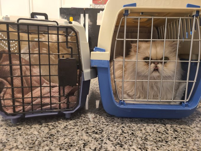 Managed to secure both cats at o-dark-thirty after fifteen minutes of intense Keystone Cops-esque shenanigans