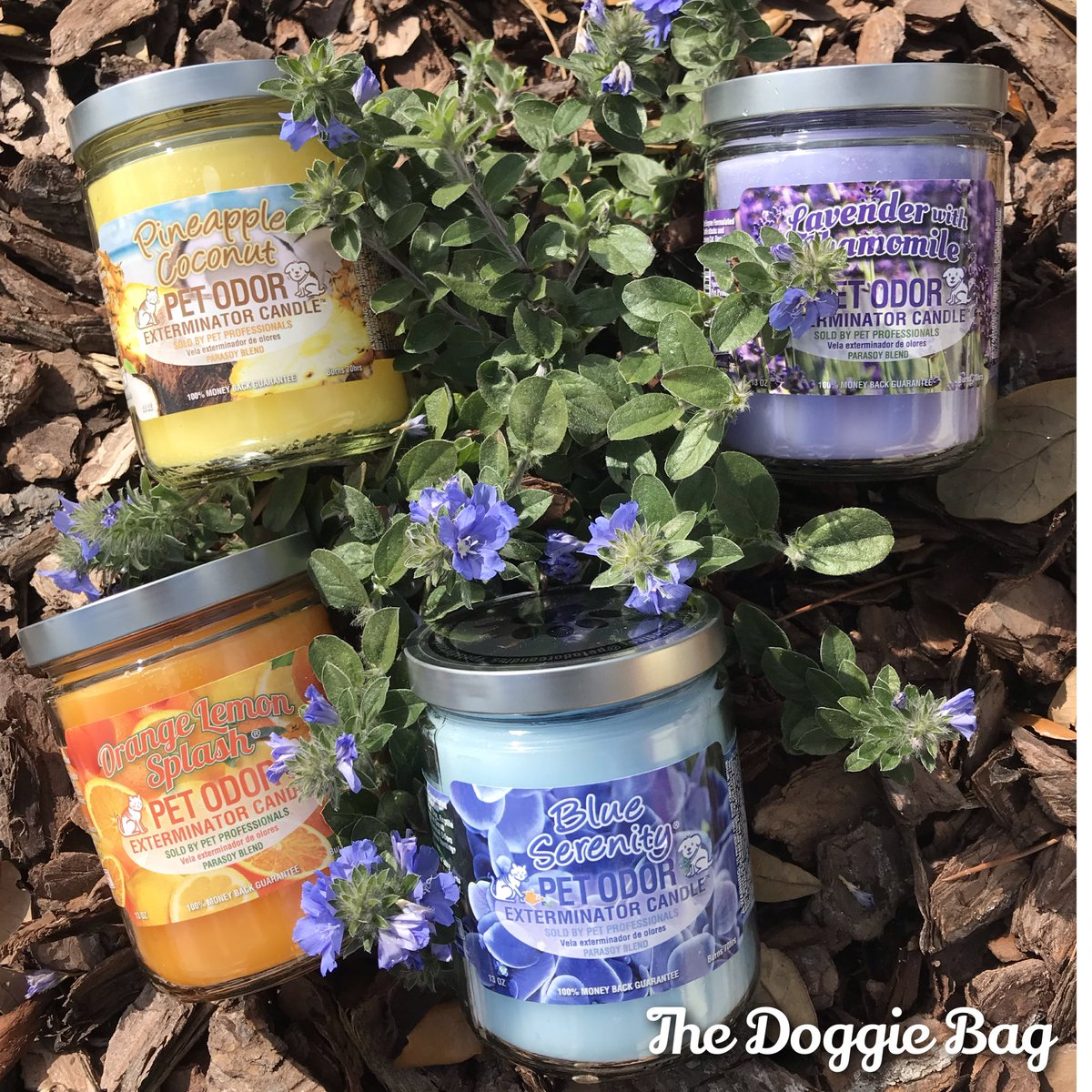 It's Time for a Breath of Fresh Air!🌬 Stop in & Sniff Out the newest arrival of #Candles @doggiebagboutique 🕯  #breathe #fresh #freshair #lavender #serenity #candle #thedoggiebag #petboutique #happyplace #shoplakeland #lakelandflorida #lakelandfl #dogmomsoflkld