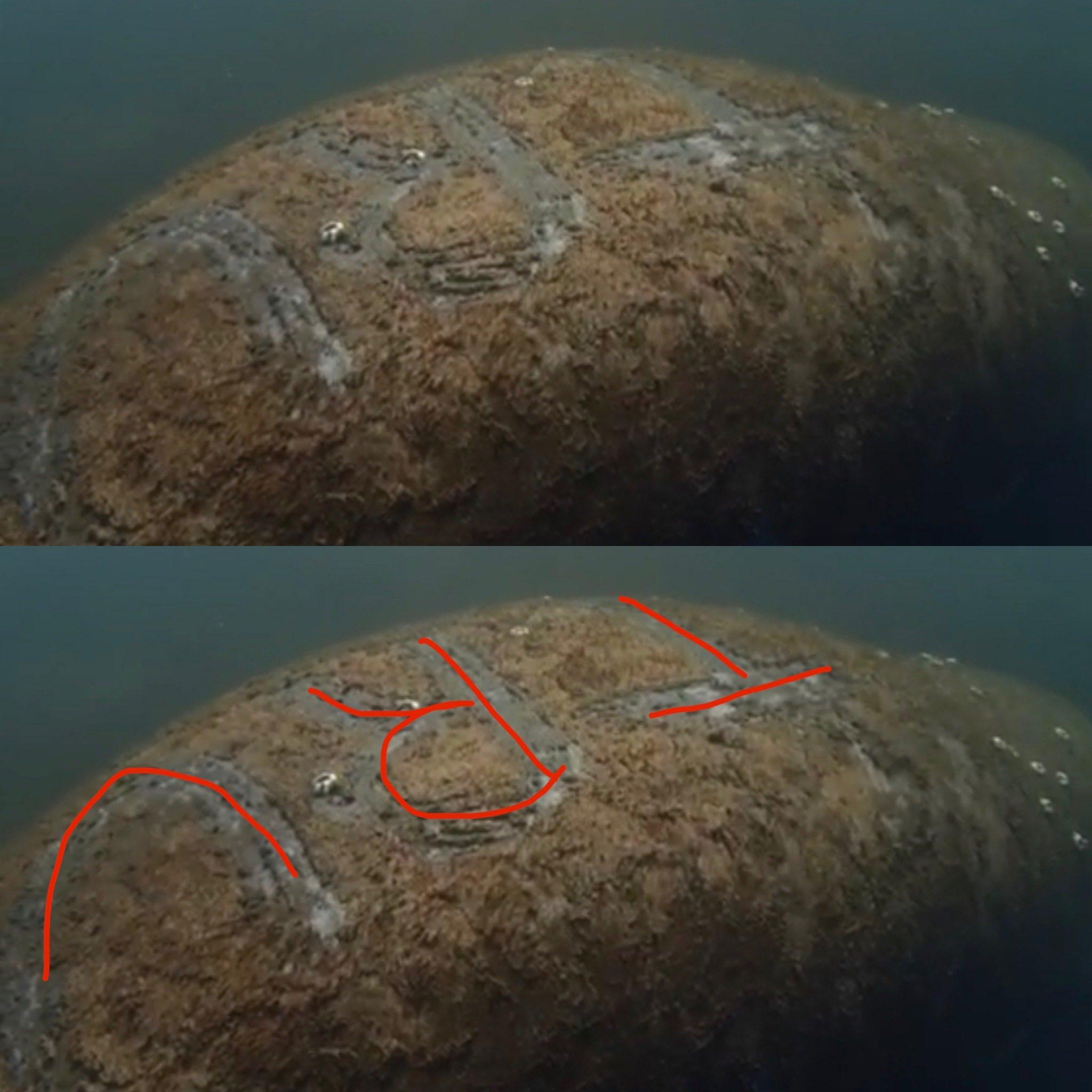 Peixe-boi encontrado com 'TRUMP' gravado em suas costas provoca investigação federal