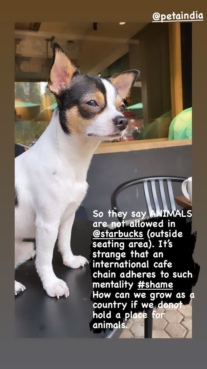 So they say ANIMALS #tinydog are not allowed in @starbucks (outside seating area). It's strange that an international cafe chain adheres to such mentality #shame  How can we grow as a country if we donot hold a place for animals. Pl say something. https://t.co/ozt9e0nEy1