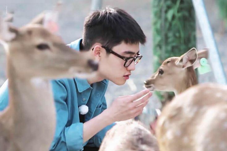 Replying to @dandelionxiu: #KYUNGSOO #DO (D.O.) and his love for animals: a short thread