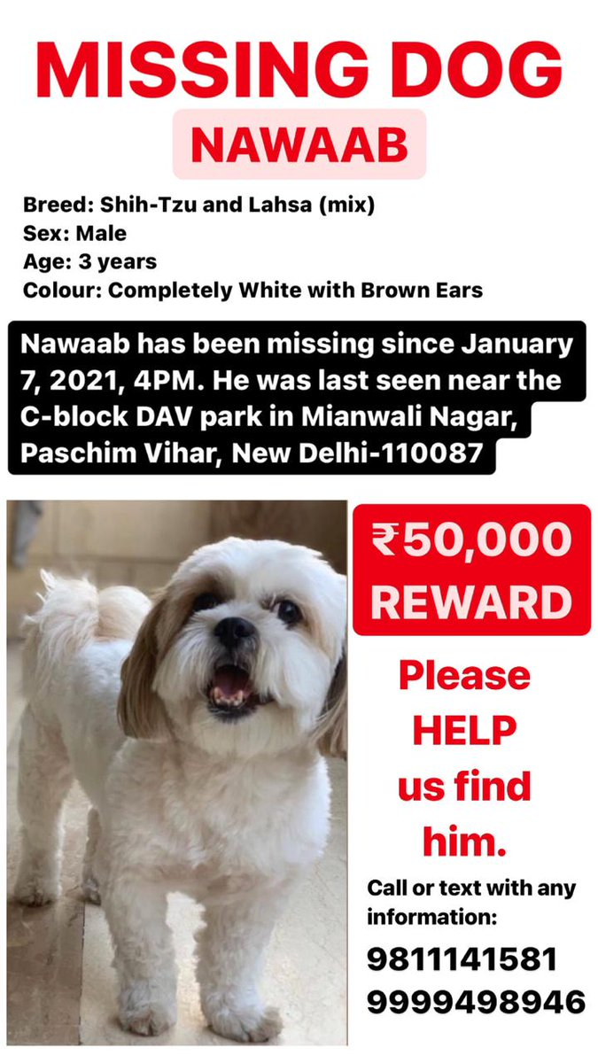 Replying to @DelhiDecoded: #LostDog #Delhi
