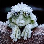 アメリカアカガエルの神秘!心停止の完全な冬眠に入り、春になると復活する!!