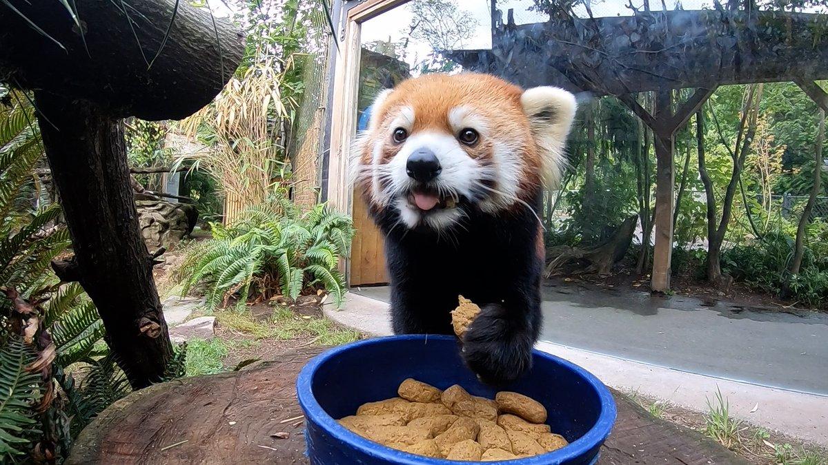 Cookies enabled