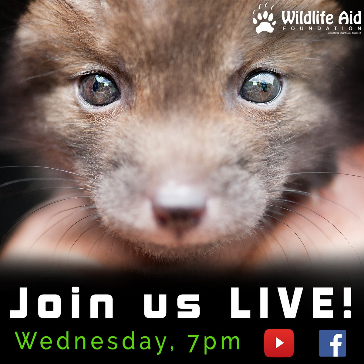 Join us LIVE tomorrow (Wednesday 13th) at 7pm UK time for our first #livestream of the year!  If you have any questions for the team, make sure you join us and we will answer all we can!  We hope to see you on #YouTube or #Facebook tomorrow evening! :)