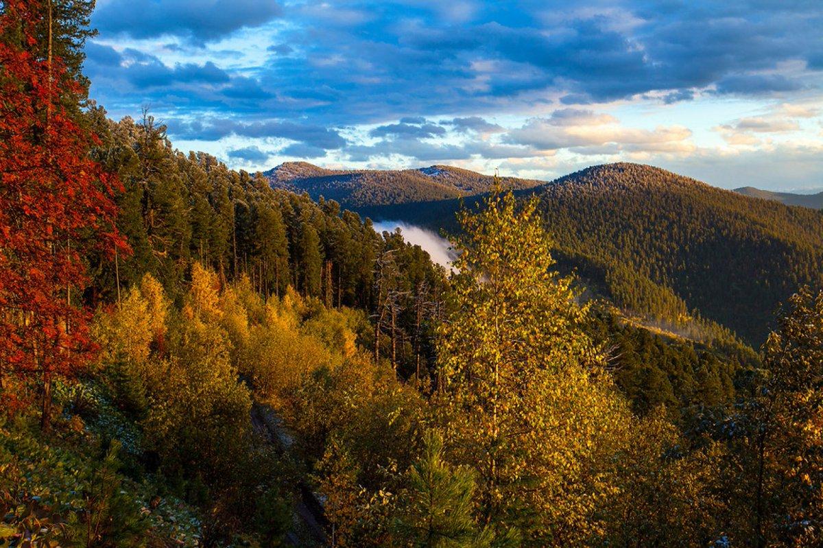 Ежегодного 11 января  в России празднуется День заповедников и национальных парков – очень важный праздник, целью которого является напоминание о необходимости сохранения природы как на уровне государства, так и всего мира.  12 января библиотекари Высоковской... https://t.co/WftLrc84tw