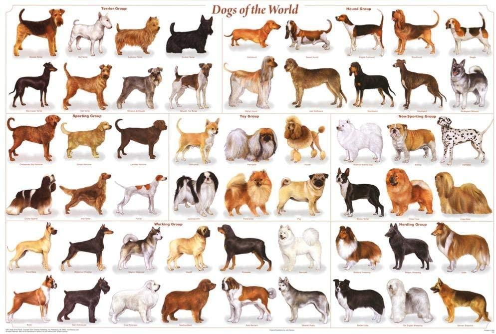 """""""The dog is the god of frolic."""" – Henry Ward Beecher  #dogsofinstaworld #dogphotography #doggy #dogsofig #lovedogs #instadogs #instagood #perros #rescuedog #k #nature #photooftheday #animal #cat #hund #happydog #labrador #cutedog #pitbull #bhfyp #puppylife #hundeliebe"""