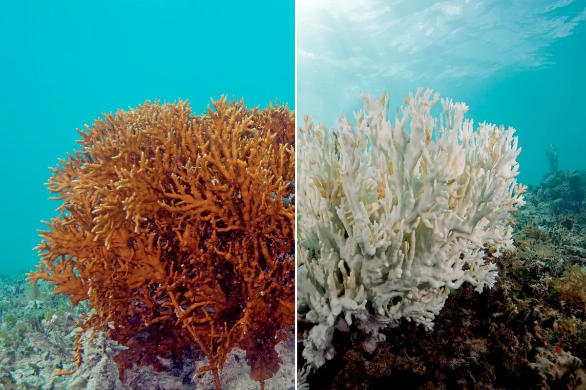 Do you know how coral get their colors? Do you know what coral bleaching is?  Do you know what steps we can take to help fix it?? The students of New D are going to find out !! We continue to build out understanding of sustainability. <a target='_blank' href='http://search.twitter.com/search?q=APSGreen'><a target='_blank' href='https://twitter.com/hashtag/APSGreen?src=hash'>#APSGreen</a></a> <a target='_blank' href='https://t.co/Ilf1QOxBpC'>https://t.co/Ilf1QOxBpC</a>
