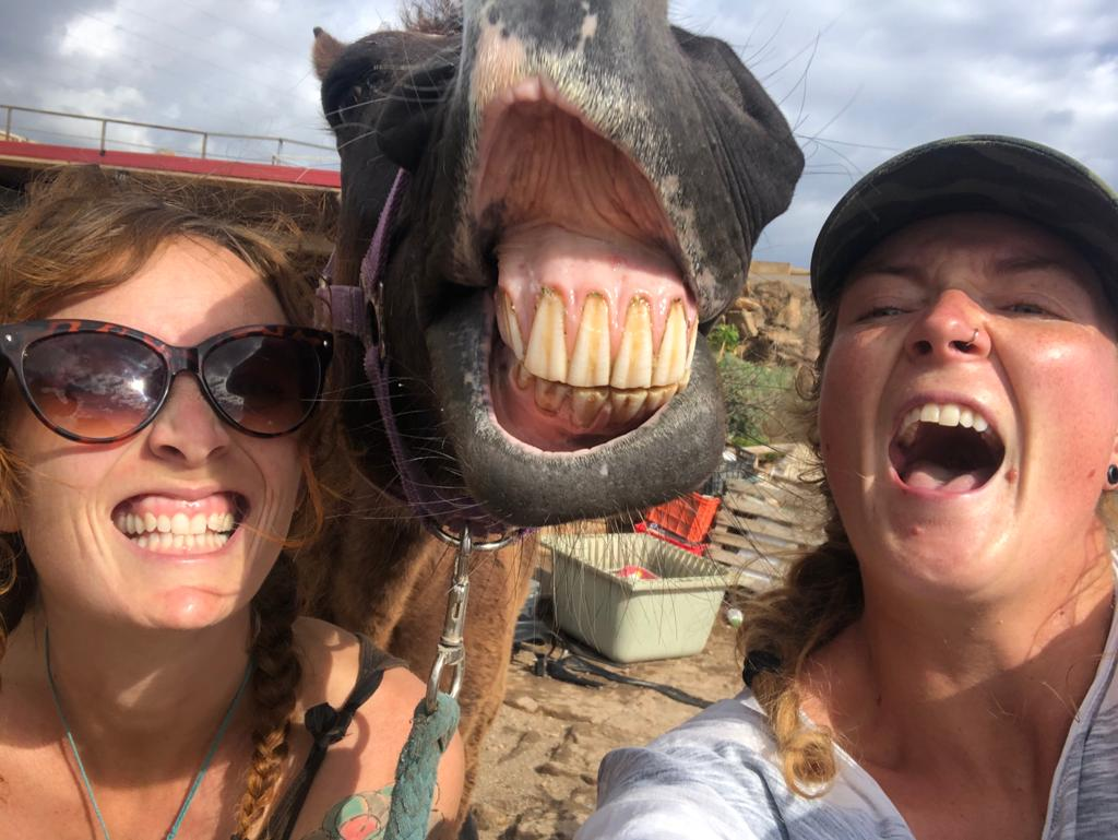 Thank you for sharing our post today. @rickygervais We are all VERY happy about it at our horse sanctuary. Big grin from our rescue horse Trufa and our volunteers!