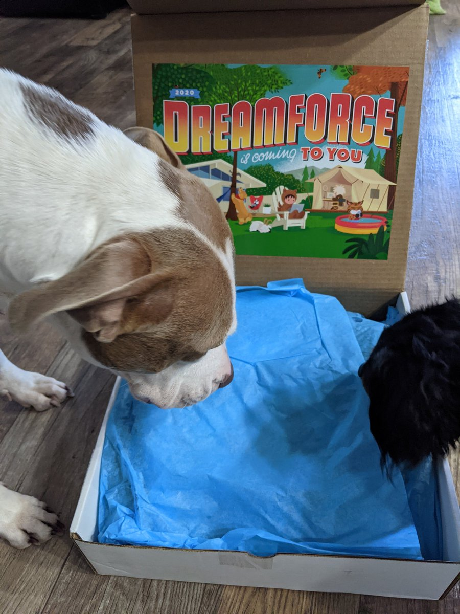 #DF2U made it to me! Max & Maggie are very interested in the box!