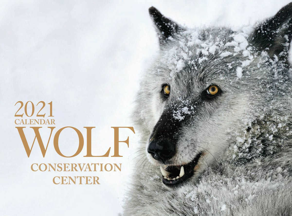 Get your WOLF CALENDAR before they're gone!  Celebrate wolves year-round with a Wolf Conservation Center 2021 calendar!  Purchase now ➡