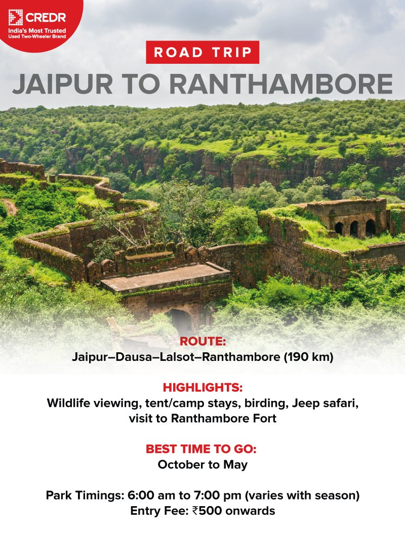 #RoadTripTips  Make a road trip to Jaipur better by adding a ride to Ranthambore National Park. This is one road trip from Jaipur takes merely 3.5 hours. Here, you can witness the Bengal tiger in its natural habitat, along with the #Ranthambore Fort. #CredR #NewYearNewJourneys