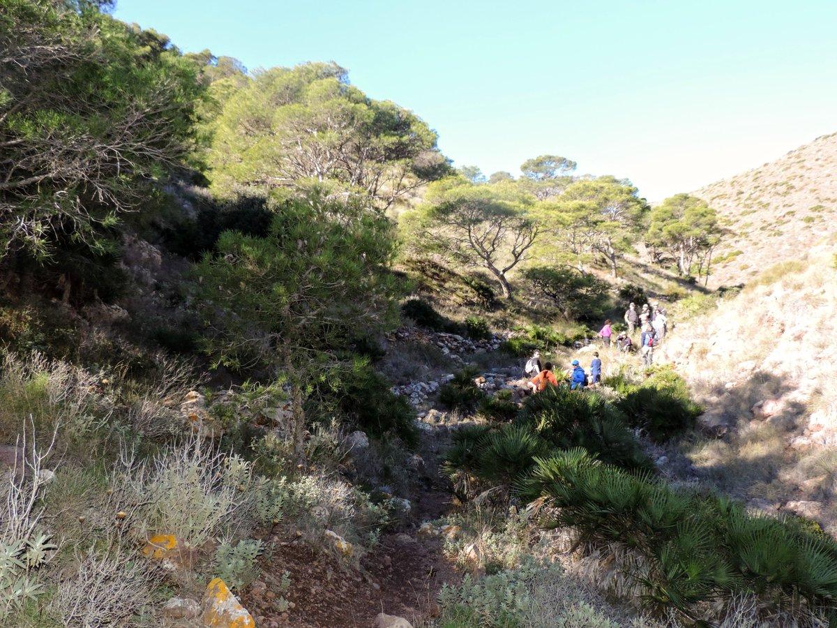 Cuesta subir al pinar relicto del Barranco del Negro, pero vale la pena conocer este rincón tan peculiar del Parque Natural de #CabodeGata - Níjar. Un reflejo del gran pinar que llegaría hasta la costa hace mucho, mucho tiempo.  #Almería