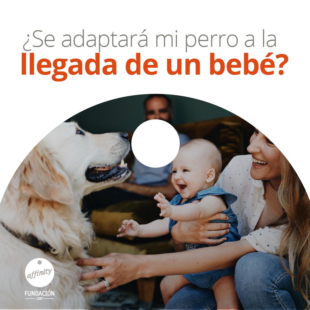 Nuevos olores, sonidos, rutinas… la llegada de un bebé es un cambio importante en la vida de un #perro. Pero siguiendo un proceso de adaptación, pasará de verlo como un desconocido a querer ser su mejor amigo 💖  Descubre nuestros #tips 👉https://t.co/Uuyrt05NHx https://t.co/r2KZmtGSSf