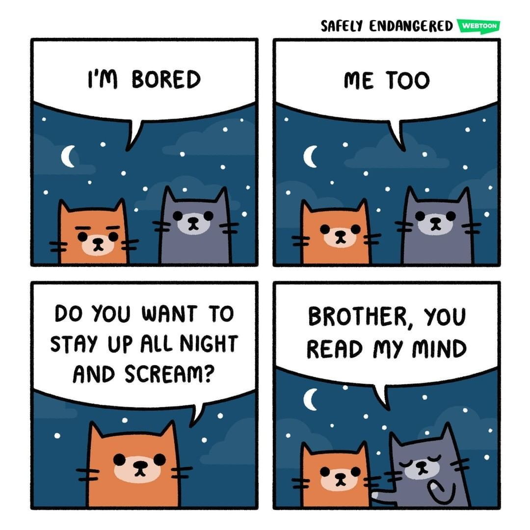 From @EndangeredComic   I wish I can tag my cat  #meowed #meowedofficial #themeowedclub