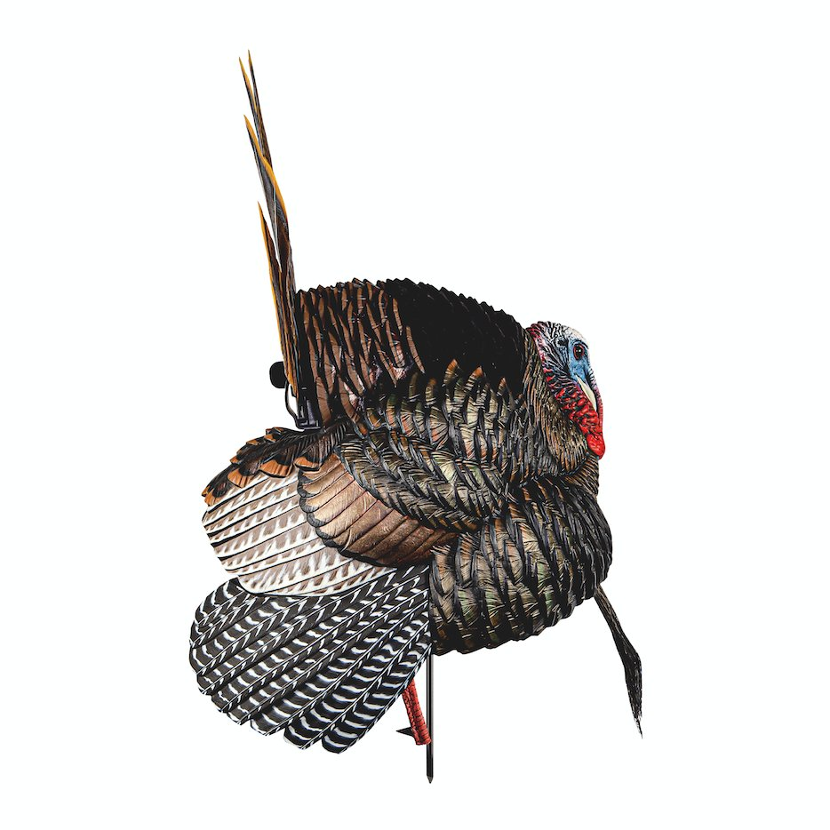 New for 2021!  The HDR Strutter brings an unprecedented level of realism and detail. This convincing Tom allows for intricate customization when using advanced tactics on mature, wise birds.  *Available Soon!* #AvianX #AvianXTurkeyDecoys #HDRStrutter