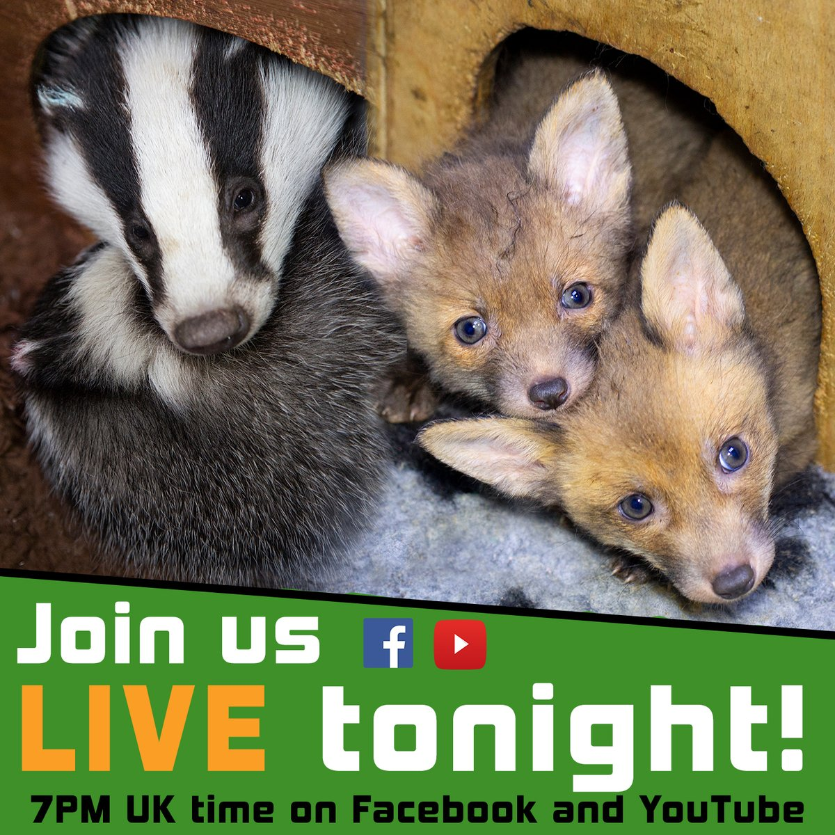 We hope you can join us LIVE this evening on Facebook and YouTube for our first #livestream of the year!  Featuring centre updates, recent rescues, an update on our new developments and, of course, a Q&A session it should be a fun hour!  Hope to see you there!