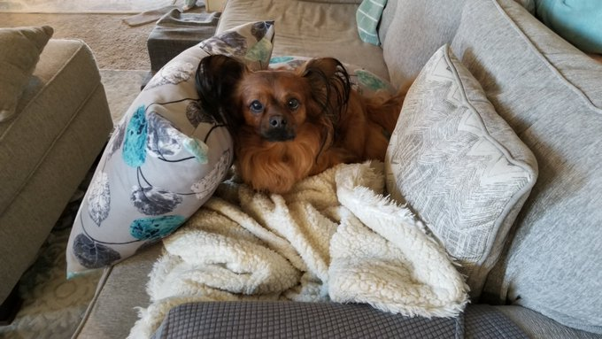 I thought stacking a pillow and blanket would keep this rascal from stealing my seat! He found a way