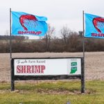 Image for the Tweet beginning: Farm to fork #shrimp found
