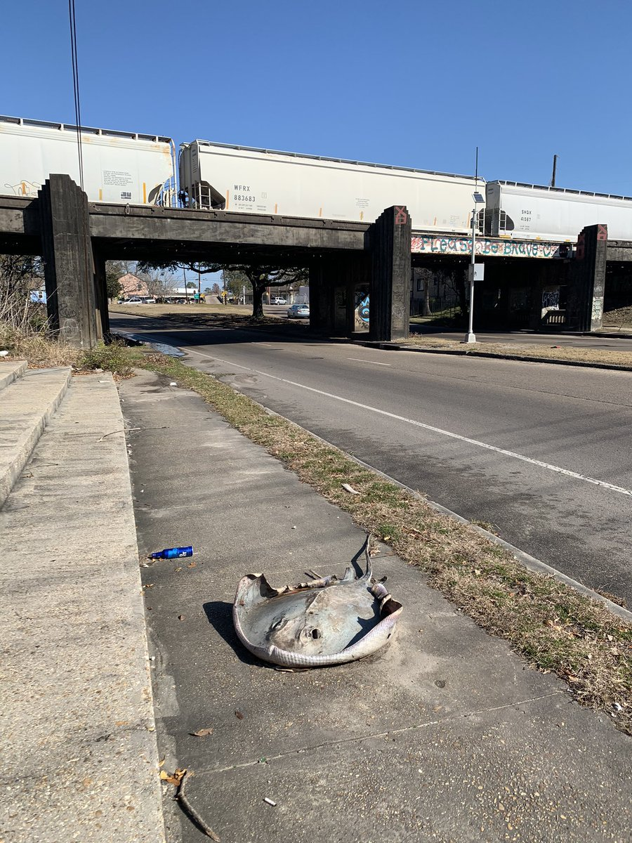 so y'all know about the decomposing stingray on broad?