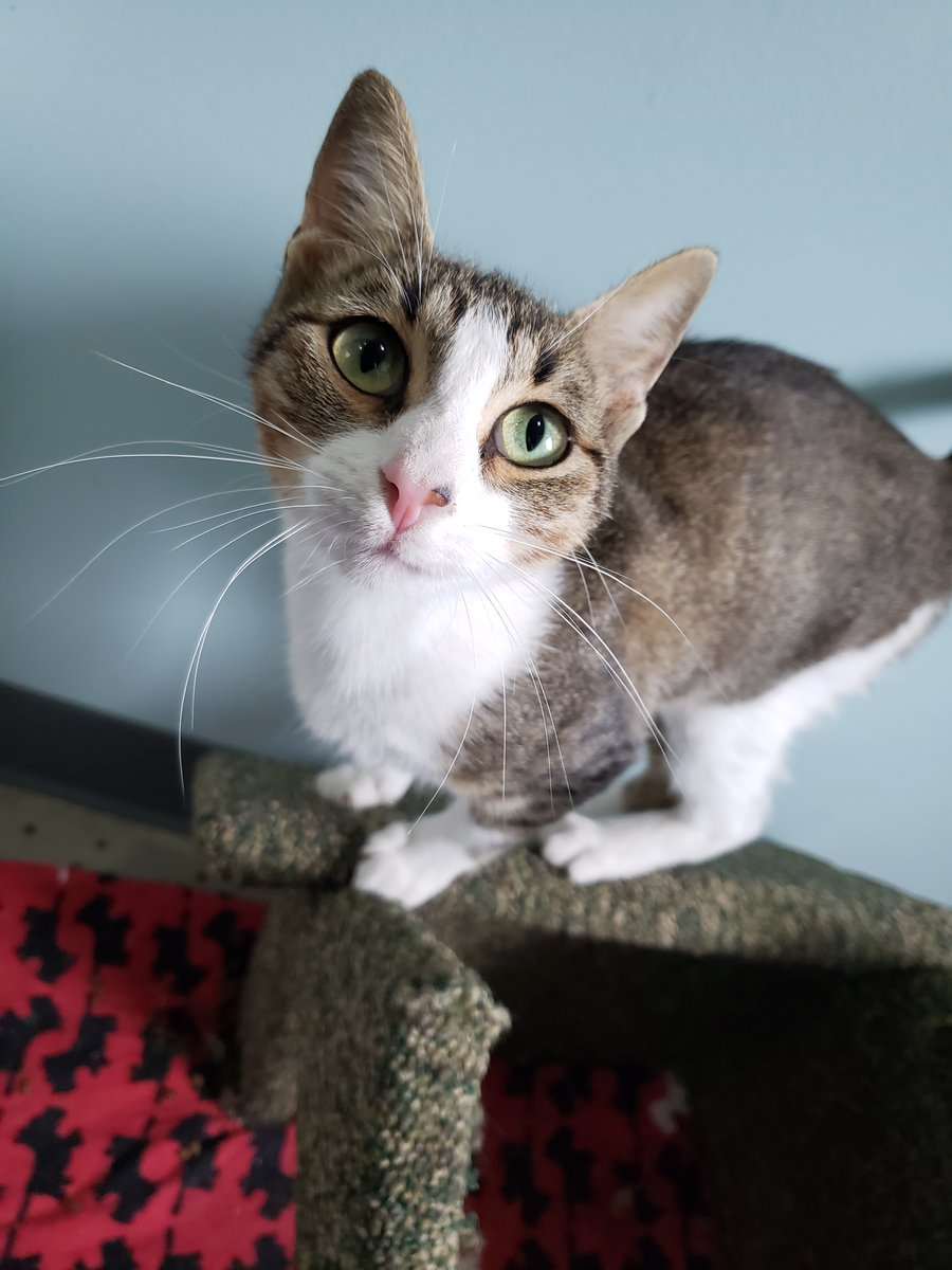 Pretty Patty needs a home! Technically her name is just Patty, but she's earned the nickname, don't you think? https://t.co/ekvGZK27bf