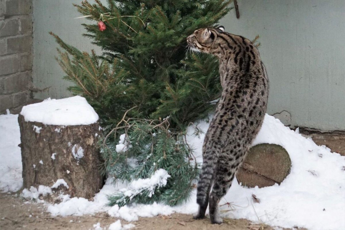 @Reuters Well it occurs they find Christmas trees very tasty! :) https://t.co/Tq5CX42izU