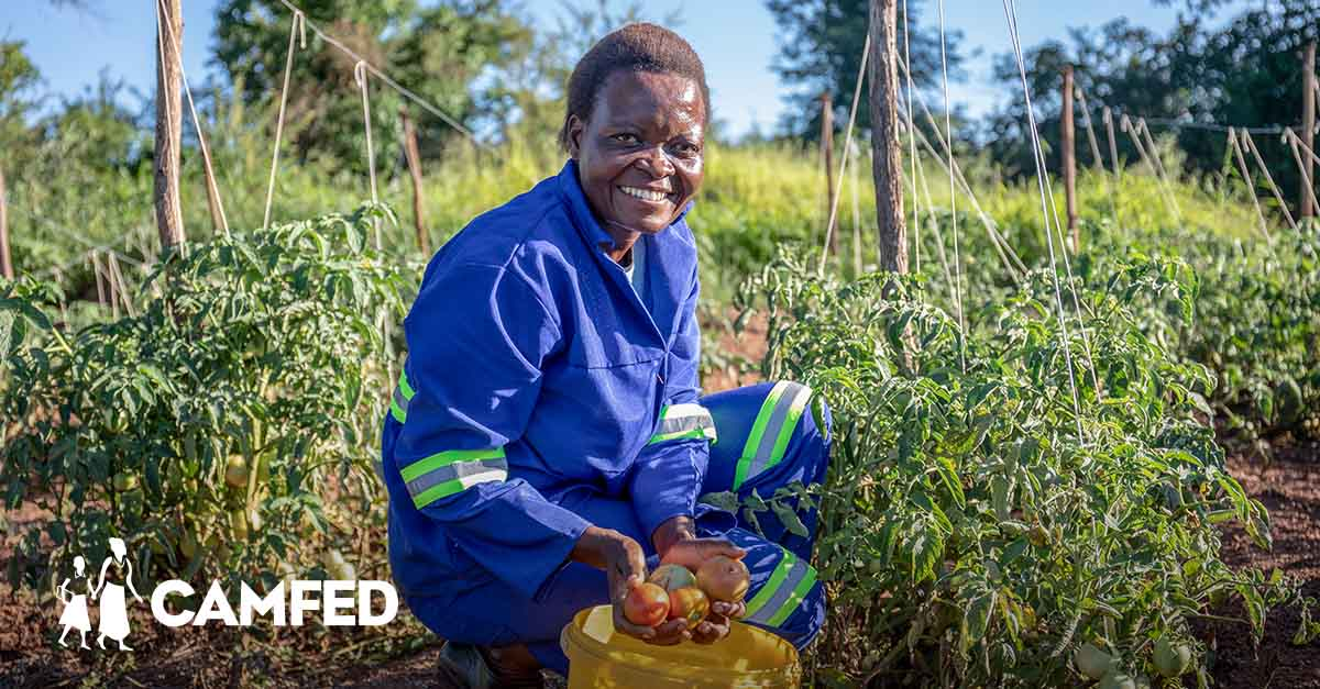 CAMFED Association members like Beauty are leading the way in #ClimateAction 💪🏿 by training local farmers in climate-smart techniques to create resilient food systems. 🌾 It's just one way young women are ensuring the next generation can stay & thrive in school. #WednesdayWisdom