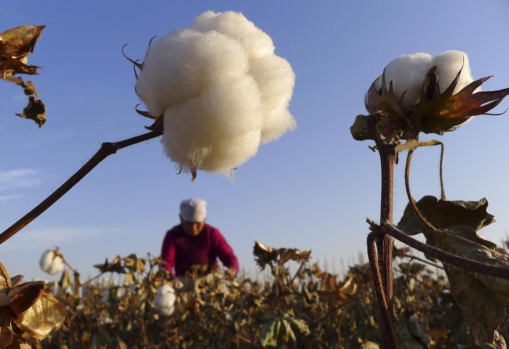 US bans all cotton, tomatoes from Chinas Xinjiang region Photo