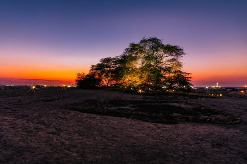 لغز يحير زوارها.. شاهد شجرة وحيدة في صحراء #البحرين منذ أكثر من قرن.