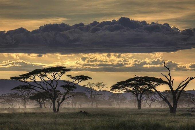 amanece ... #intensidad en  #Africa   #sfm  #eichelbergamnon