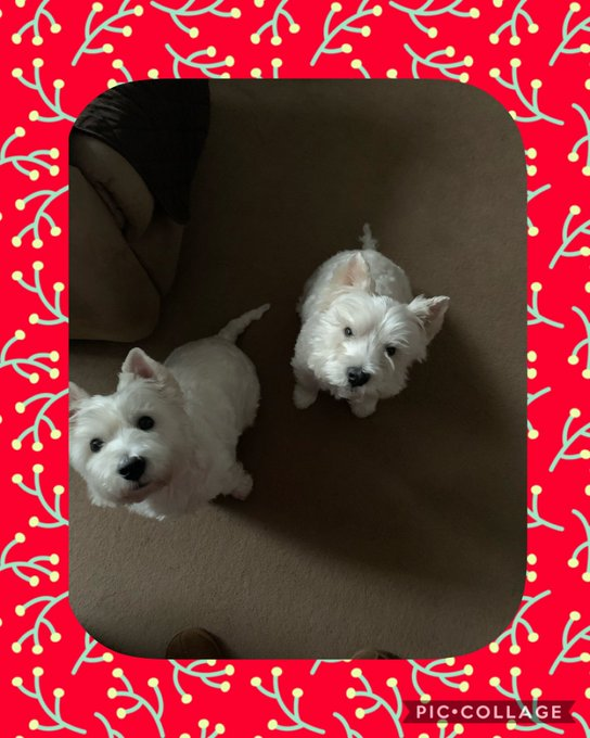 Happy Birthday Nicki     from Dougal Daisy & I!