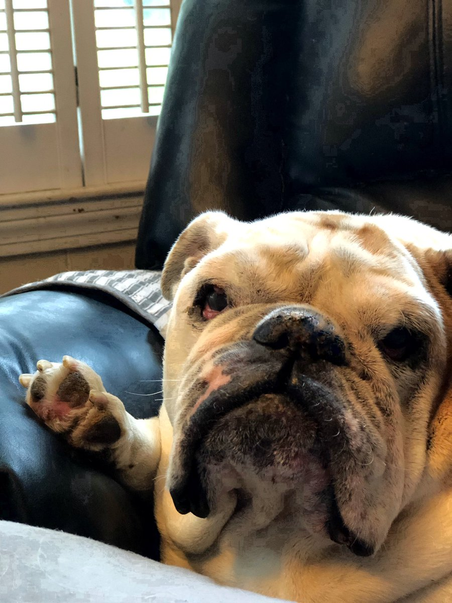 Deep Thoughts, by Gertie the Bulldog... The Secret ingredient is Love... The best thing I did this Entire year was Love you... Love, Gertie's Family ❤️🍩🐾🐶🐾 #gertiethebulldog #gertiegotdonuts #queenofallbulldogs #deepthoughts #love #ThursdayThoughts #Bulldog #dogs #Dog