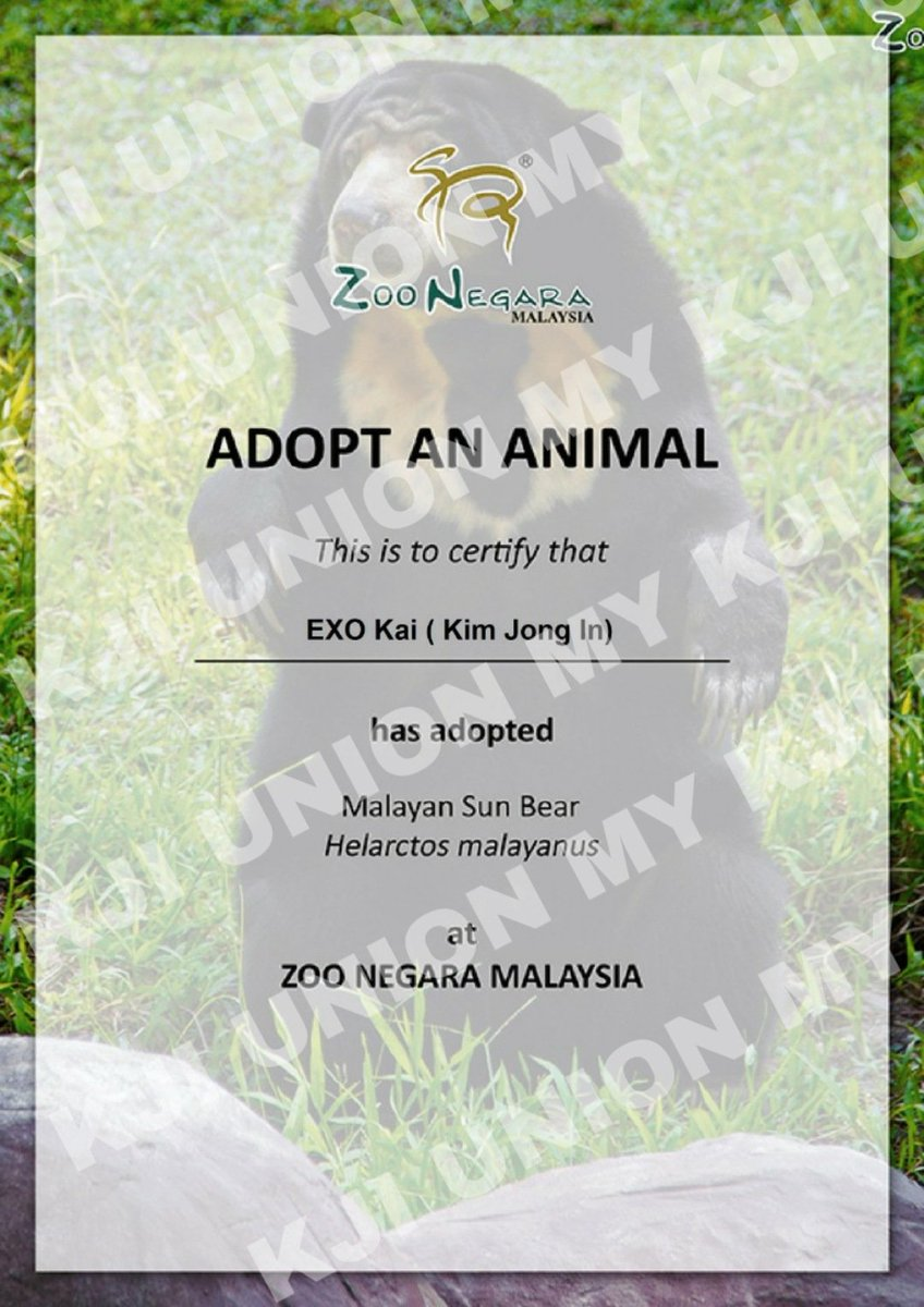 [KAI 28th Birthday] On EXO's KAI 28th birthday, @kjiunionmy make an adoption of Malayan Sun Bear named Mango under the name of EXO KAI (Kim Jong In) in Zoo Negara.   #ArtistKaiDay #HappyKAIDay  #종인아생일축하해 #가장_따뜻한_겨울_카이데이