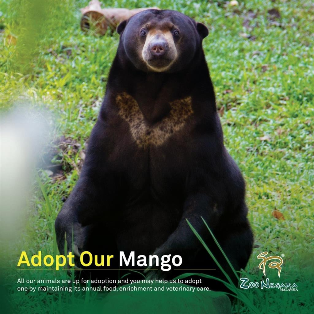 [KAI 28th Birthday] On EXO's KAI 28th birthday, @kjiunionmy make an adoption of Malayan Sun Bear named Mango under the name of EXO KAI (Kim Jong In) in Zoo Negara.   #ArtistKaiDay #HappyKAIDay  #종인아생일축하해 #가장_따뜻한_겨울_카이데이