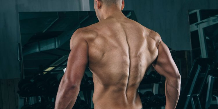How to build a monster back Get your back looking huge  #lamuscle #fitness #back #musclegrowth #weights #training #workout #muscle #lean #fit #gym #exercise #nutrition #health #gains #ThursdayMotivation #thursdaymood