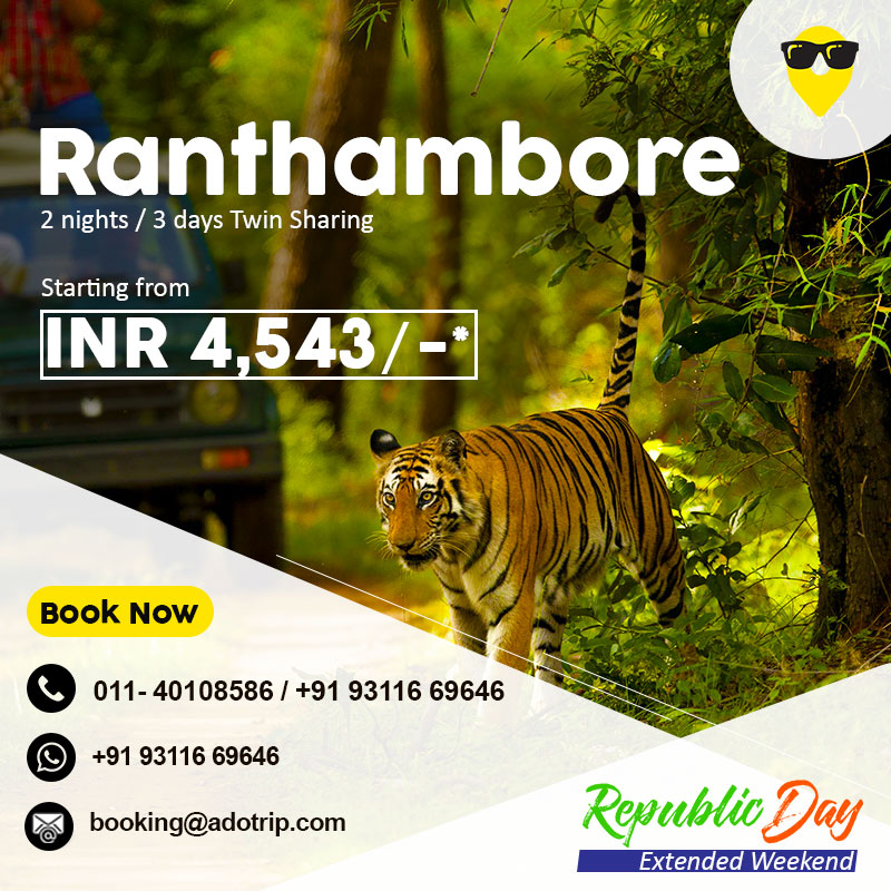 A thousand years old fort and wild beasts, what more could you ask for?  📍Ranthambore is one of the few places which showcase a fusion of wildlife and historical heritage.  Book your next vacation now! 👉  #adotrip #ranthambore #ranthamborenationalpark