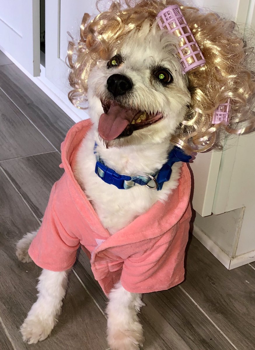 It is #nationaldressupyourpetday! Sir Charles is thrilled to celebrate... #n4tm @kmov #DogMom #PoorThing