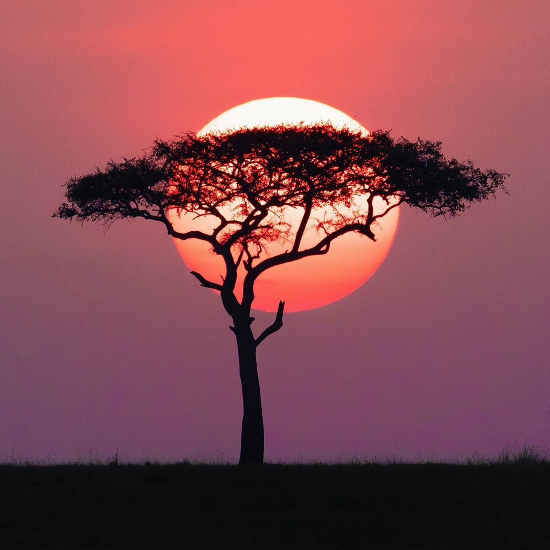 Just a few seconds between these two sunset colours in the Maasai Mara. Pure magic. Photos by Tanny  #vacation #travel #holiday #travelgram #summer  #travelphotography #trip #wanderlust  #traveling #adventure #travelling #explore #tourism RT @kenyapics