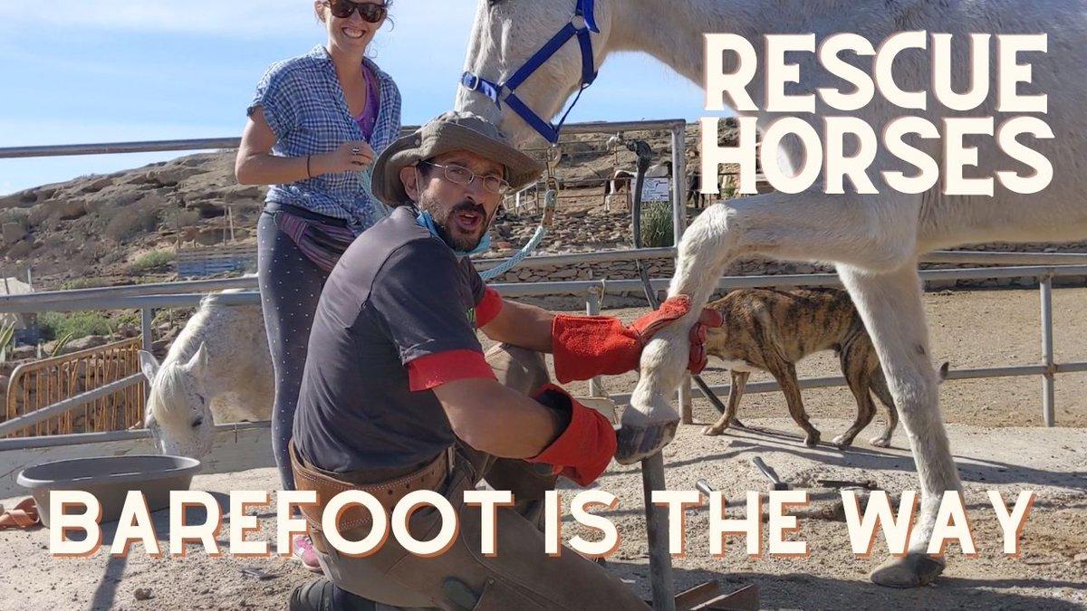 Barefoot rescue horses. Removing shoes of the new horses. Finca life episode 8...  #barefoothorse #horserescue #tenerife #horserescuecentre