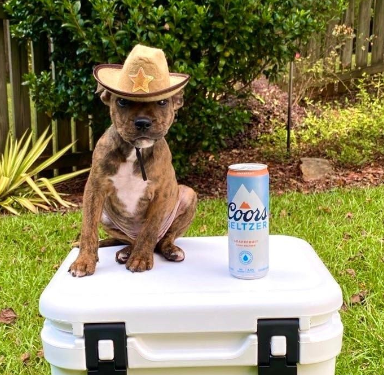 Even pups are stepping up to help restore our rivers! #Dressupyourpetday (📸: princesse_piper on IG)