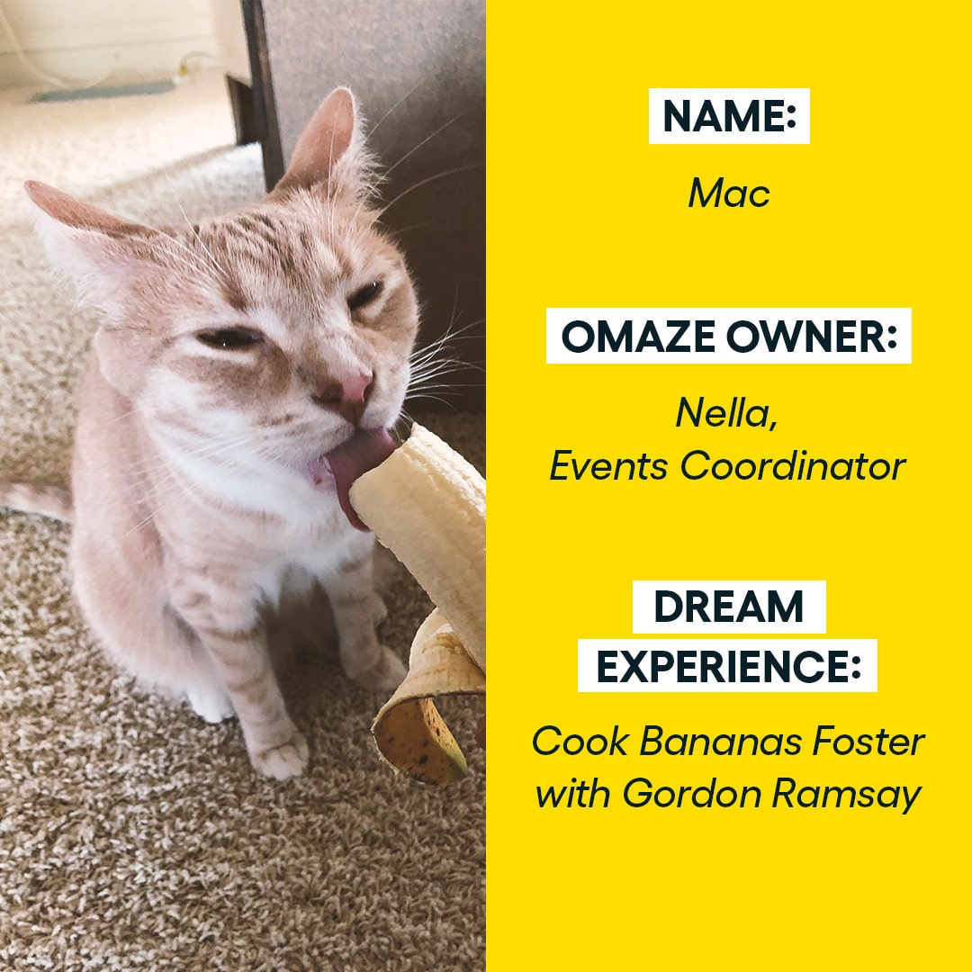 You deserve some pawsitivity! Check out these dream experiences from our furravorite teammates. 🐾 What would be your furry companion's dream come true?  P.S. Brad Pitt, call us about the ball pit.  #omaze #omazepets