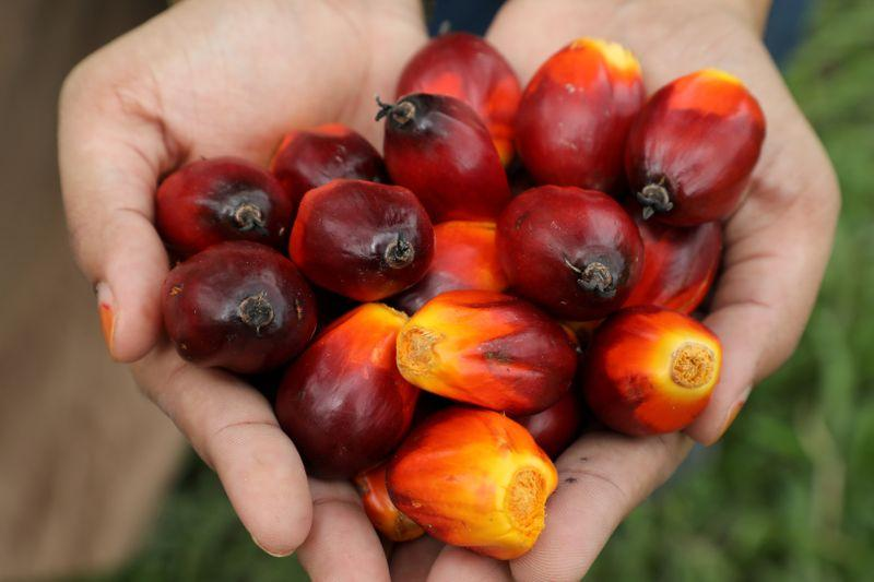 Planters say anti-palm oil campaigns hinder sustainability shift