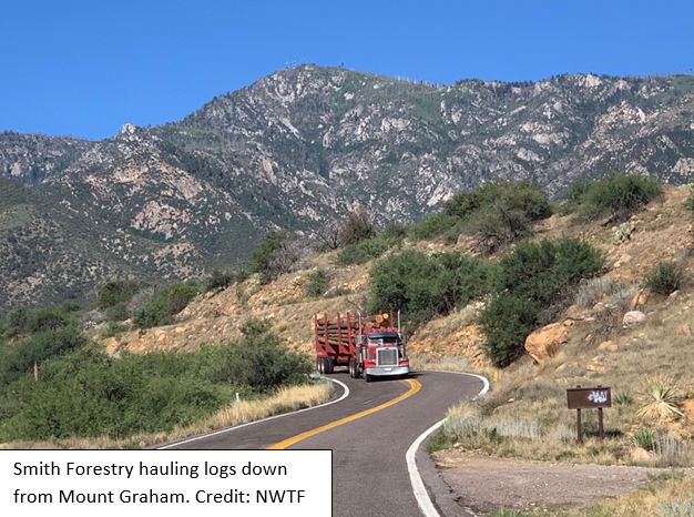 """@NWTF_official assists the FS on the Pinaleño Ecosystem Restoration Project at Safford RD—removing small diameter understory trees and overstory trees up to 18"""" in diameter. Efforts benefit the Mexican Spotted Owl, Gould's Turkey, and Save the Habitat, Save the Hunt Initiative."""