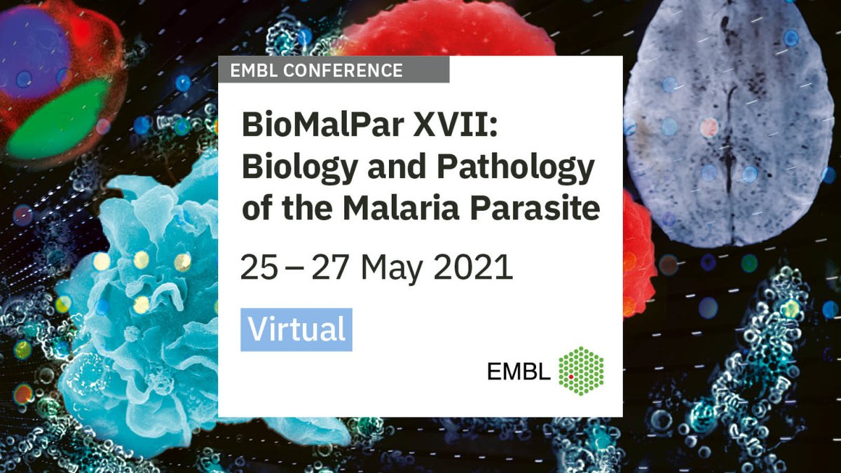 And going virtual again- #EMBLmalaria 2021! This #malaria/#Plasmodium conference will be held from the 25th-27th of May 2021 (a Tues-Thurs) and Abstract submission closes on March 22nd! The conference may be remote but the research never stops! 🦟 https://t.co/f4cVvndh8i