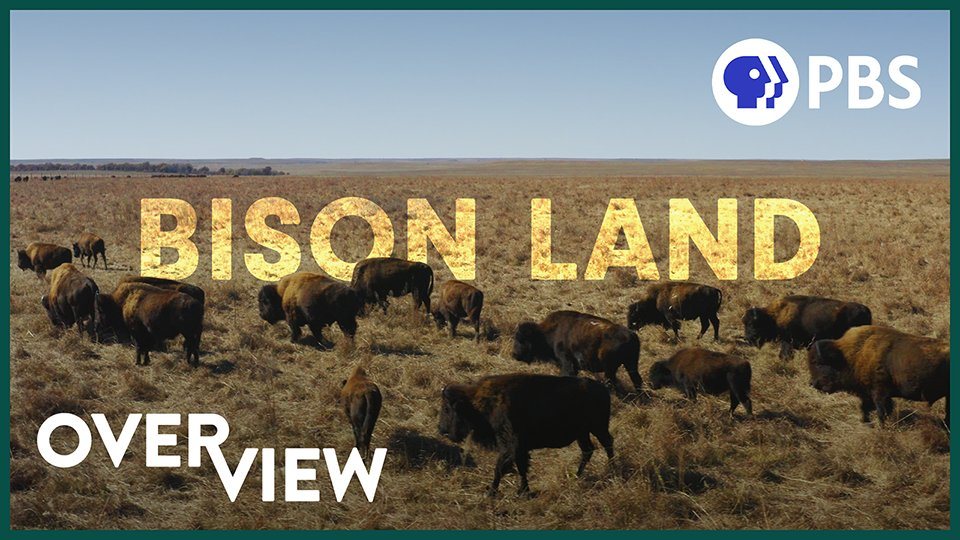 What's that smell in the air? No poop this time.   See how the bison herd at the Tallgrass Prairie Preserve are saving the American prairie and teaching us how to better manage our other poo-famous friends, cattle.   8 min video from @PBS Terra: