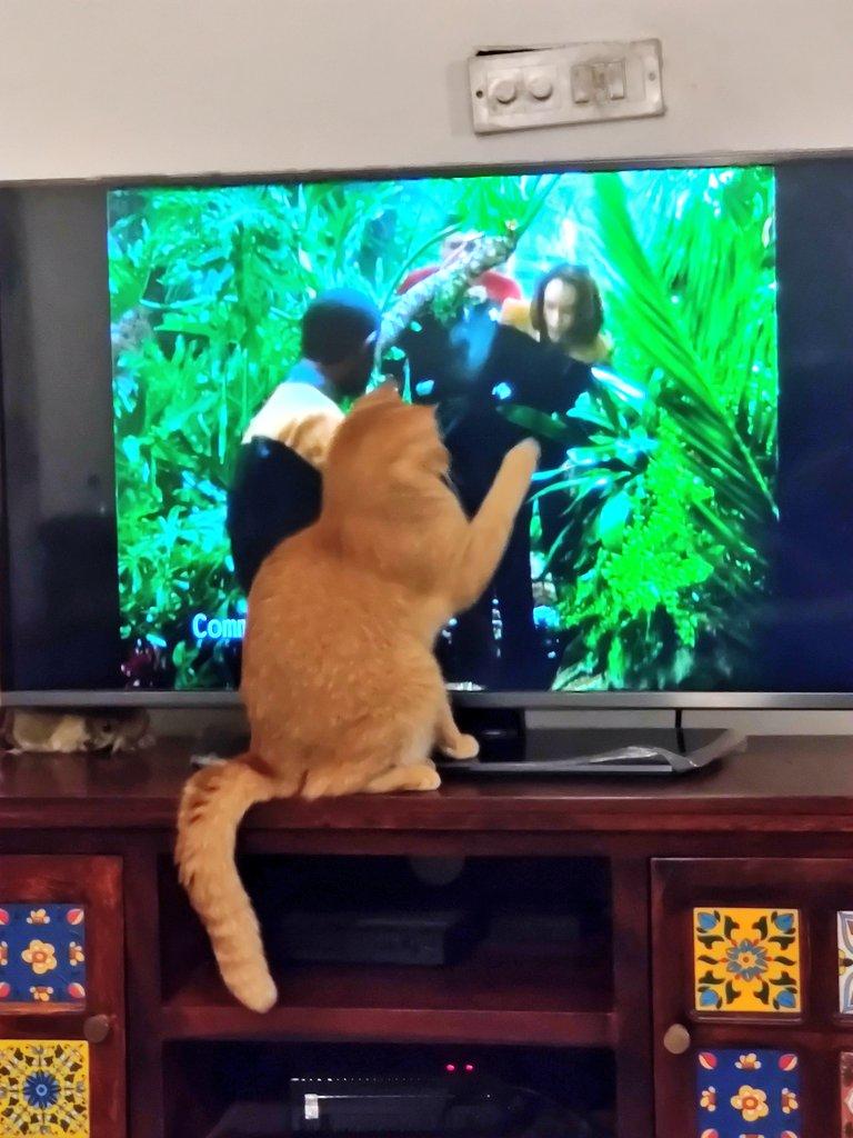 Buzhoo is quite fascinated by Star Trek.