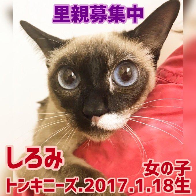 店 保護 犬 カフェ 鶴橋